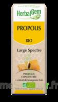 Herbalgem Propolis large spectre Solution buvable bio Fl cpte-gttes/15ml à TOUCY